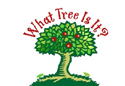 "Drawing of an apple tree with red text reading ""What Tree Is It?"""
