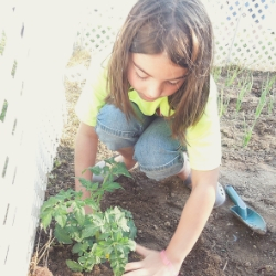 Young girl planting a tomato plant in the library garden