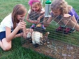Children plating with a rabbit in a cage